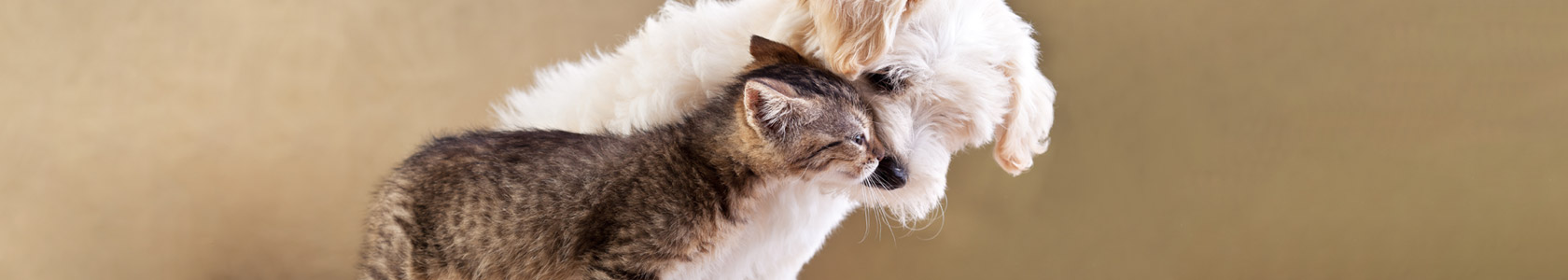 WoundGard Antiseptic Spray For Dogs & Cats