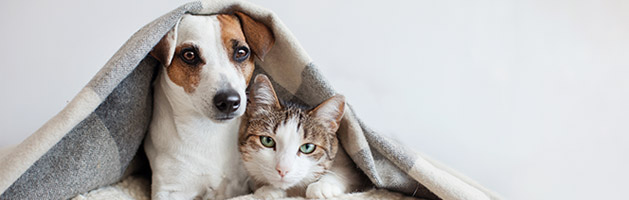 microchip your dog and cat