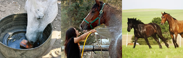 horse care in summer