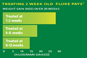 treating 2 week old fluke pays