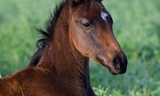 Worming Foals and Young Horses